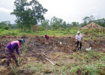 Frauen befreien Baby-Bäume von Unkraut